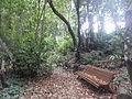 Bosque del Adelantado 2.JPG