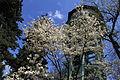Botanic garden - Cluj-Napoca 8.jpg