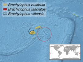Brachylophus sp. distribution.png