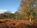 Bracken and woodland near the River East Allen - geograph.org.uk - 1587046.jpg