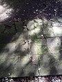 Brethren in Moravian Cemetery God's Acre near Ballymena Andrew Durr--.jpg