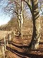 Bridleway, Fingest to Cadmore End - geograph.org.uk - 692632.jpg