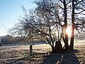 Bright Winter Morning - panoramio.jpg