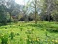 Brodie Castle gardens. - geograph.org.uk - 1247132.jpg