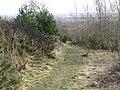 Broxburn Community Woodland - geograph.org.uk - 1757984.jpg