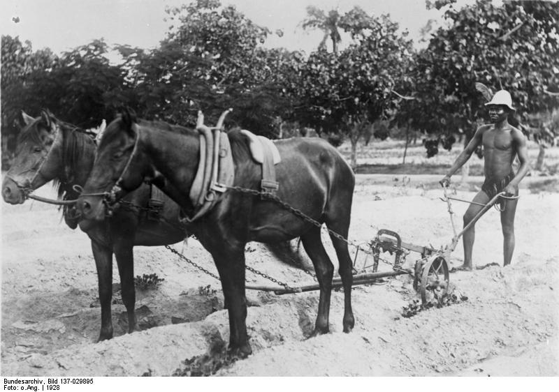 Bundesarchiv Bild 137-029895, Togo, Pfl%C3%BCgen eines Baumwollfeldes