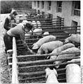 Bundesarchiv Bild 183-63707-0001, Liebau-Mogger, Bauern am Außengehege.jpg