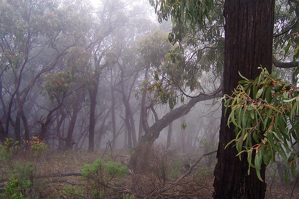 Bush in fog