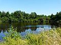 Busserolles étang bord D88 nord Villotte (1).JPG