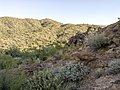 Butcher Jones Trail - Mt. Pinter Loop Trail, Saguaro Lake - panoramio (62).jpg