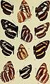 Butterflies. Vol. I-II. (1907) (20324905759).jpg