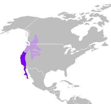 C. californica distribution