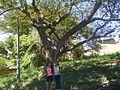 CASAS DEL MONUMENTO HISTORICO NACIONAL ( AMBALEMA) 37.JPG