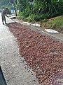 CHUAO bendito cacao venezolano.JPG