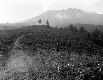 Parahyangan - Tea plantation in northern Soekaboemi in 1923