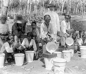 Cultivation System - Collecting natural rubbers in plantation in Java. Rubber tree was introduced by the Dutch from South America.