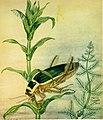 Caccia grossa fra le erbe (1942) (19891046773).jpg