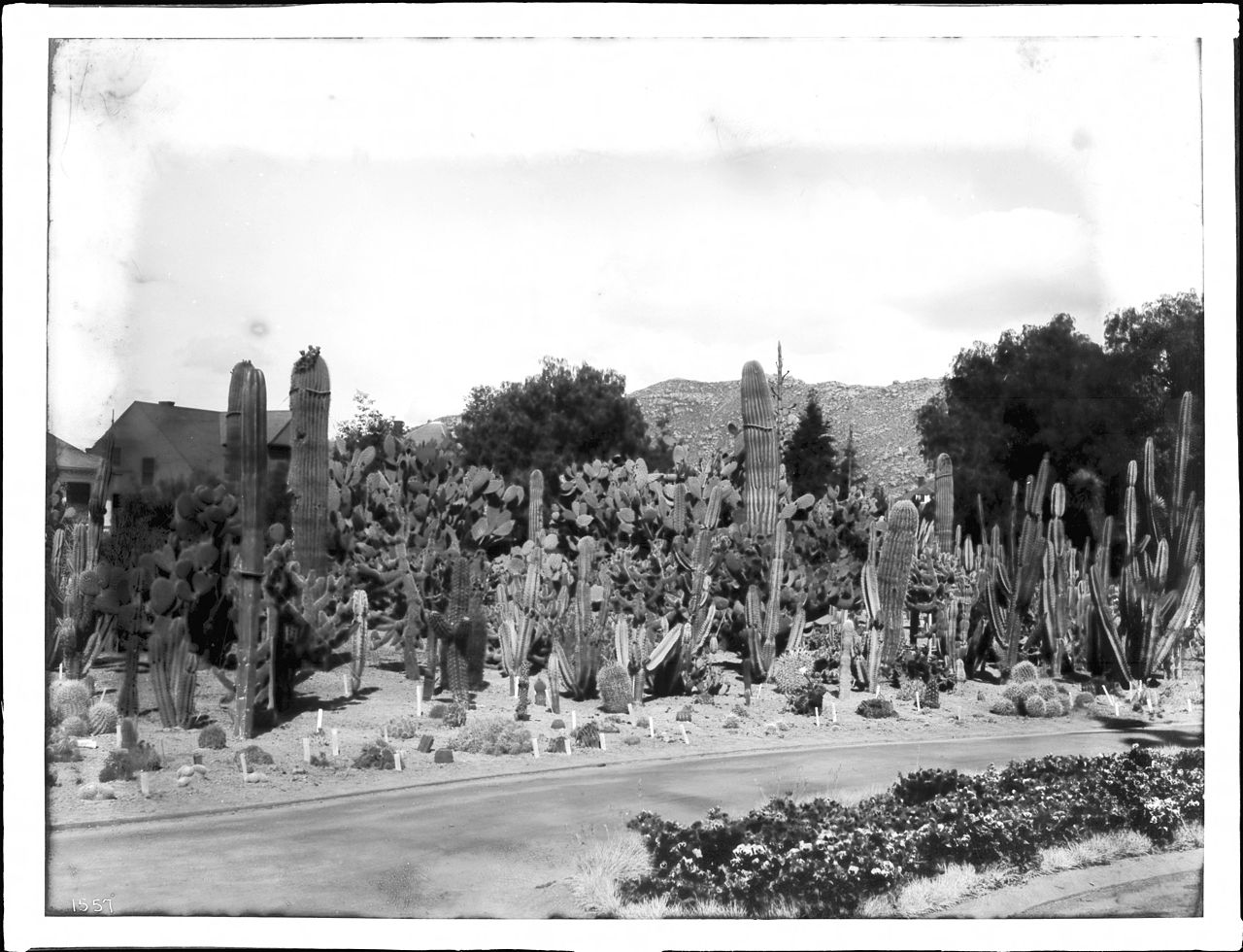 Call From A Different Number >> File:Cactus garden at Riverside, California, ca.1920 (CHS-1557).jpg - Wikimedia Commons