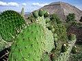 Cactus pyramid.jpg
