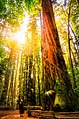 California Redwood National Park (216450575).jpeg