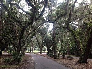 Callawassie Island - Callawassie Island live oaks