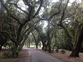 Live Oaks Island South Carolina