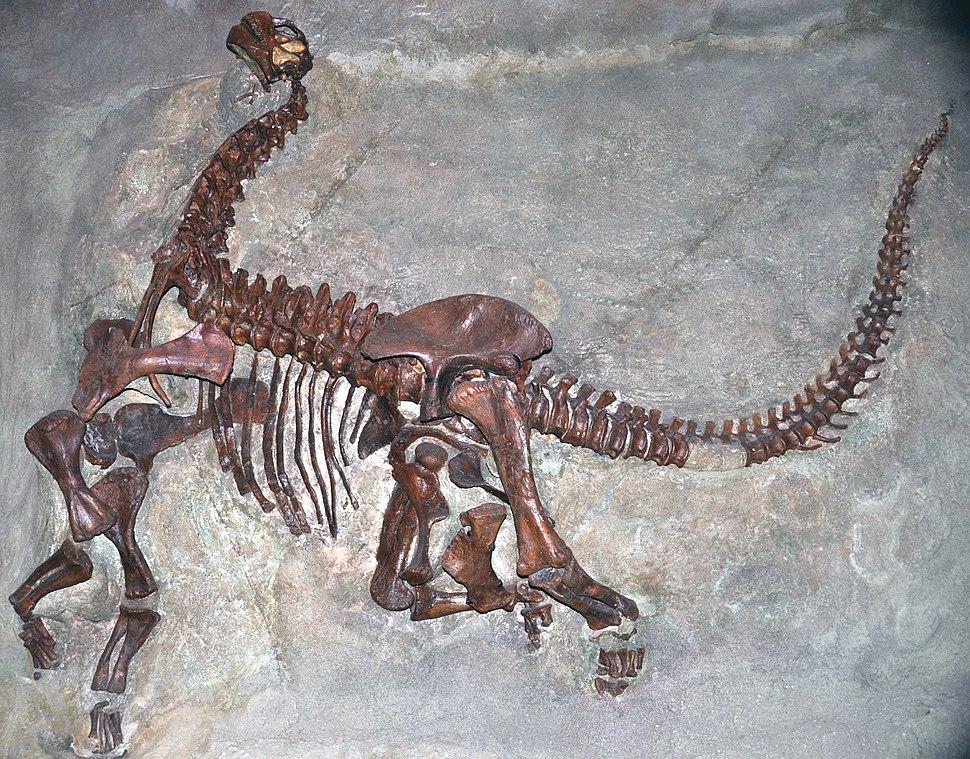 Camarasaurus lentus Carnegie