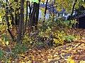 Camden, ME 04843, USA - panoramio (8).jpg