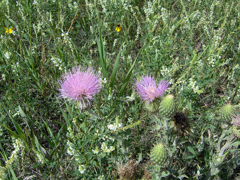 thistle canada thistle underwriting services