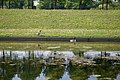 Canaux de Carré Sénart - Canal Nord - IMG 0267.jpg