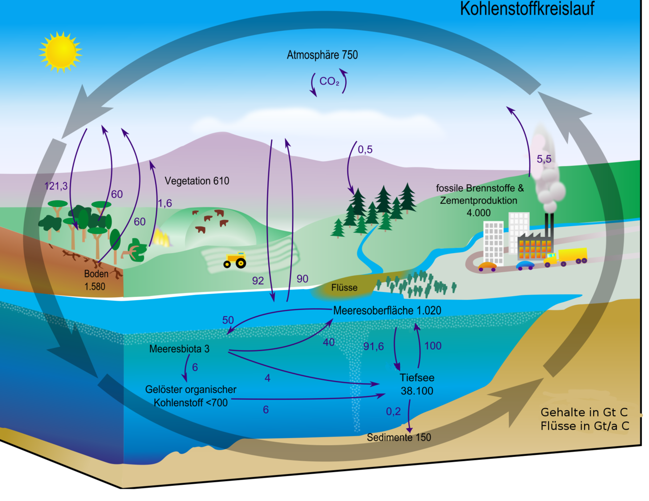 diagram of the kidney in the body file:carbon cycle-cute diagram-german.png - wikimedia commons diagram of the hydrosphere #7