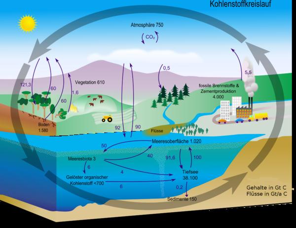 Kohlenstoffzyklus – Chemie-Schule