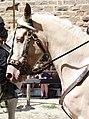 Carcassonne - Gène crème 01.jpg