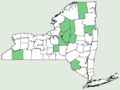 Carex magellanica ssp irrigua NY-dist-map.png