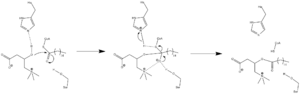 Carnitine palmitoyltransferase I - Carnitine palmitoyltransferase mechanism.
