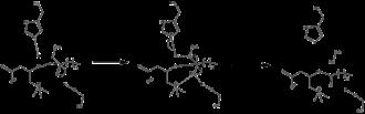 Carnitine palmitoyltransferase I - Carnitine palmitoyltransferase mechanism.