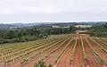 Castelnau-de-Guers (2).jpg