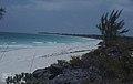 Casuarina equisetifolia.Our picnic beach (38154568194).jpg