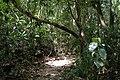Cat Tien Park, Vietnam, tropical forest.jpg