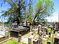 Cementerio Viejo de Camuy, Puerto Rico - panoramio (9).jpg