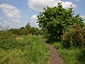 Centenary Way footpath to Ryton-on-Dunsmore - geograph.org.uk - 1891637.jpg