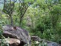 Cerro Mesa Ahumada (18).jpg