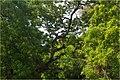 Chaaya Blu - panoramio.jpg