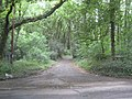 Chalfont St Peter, Old Shire Lane - geograph.org.uk - 2425339.jpg