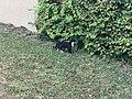 Chat Clos Lavoir St Cyr Menthon 2.jpg