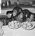 Chimpansees Tilly en Hilda uit Artis eten oliebollen, Bestanddeelnr 918-6185.jpg
