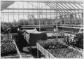 Civilian Conservation Corps, Third Corps Area, Beltsville, Maryland, Co. 5445 - plant nursery - NARA - 197148.tif
