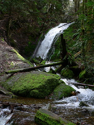 Ecology of the North Cascades - Coal Creek Falls and surrounding thick vegetation in the Cougar Mountain Regional Wildland Park.