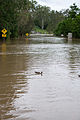 Colleges Crossing Flooded-12.jpg