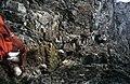 Collie's Ledge, Sgurr Mhic Choinnich - geograph.org.uk - 1139456.jpg